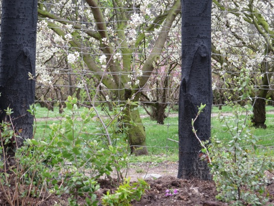 Sandra Hobbs Garden Hobbs Orchard
