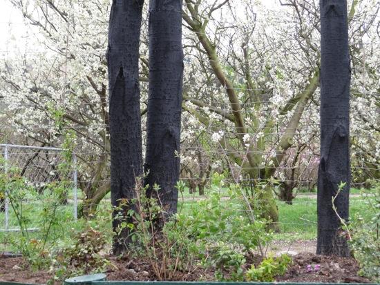 Sandra Hobbs Orchard Garden