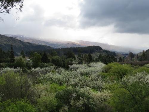 orchardspring1