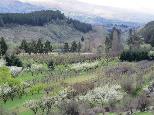 orchardspring2